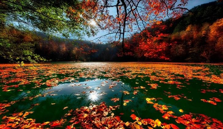 Bir Doğa Harikası Bolu ve Gölleri, Bir Finansçı