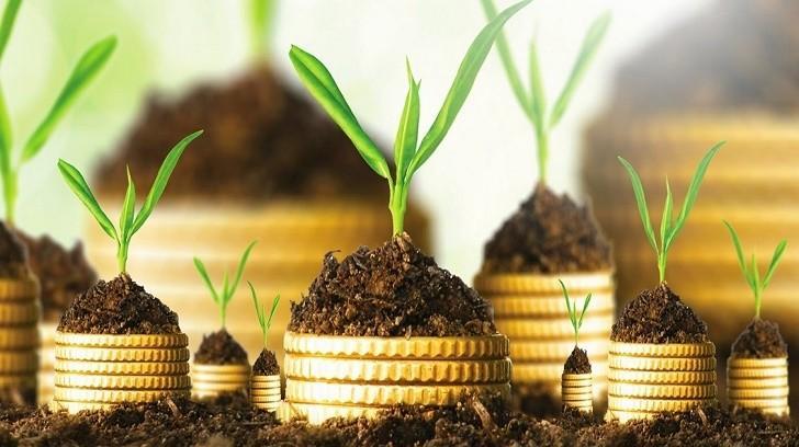 Kâr Payının Faizden Farkı Nedir?, Bir Finansçı